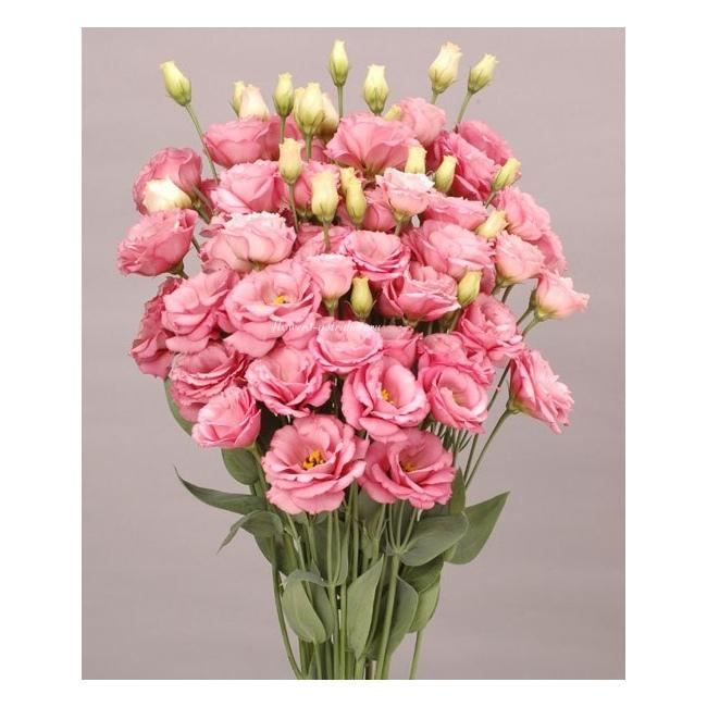 Заказать цветы лизиантусы